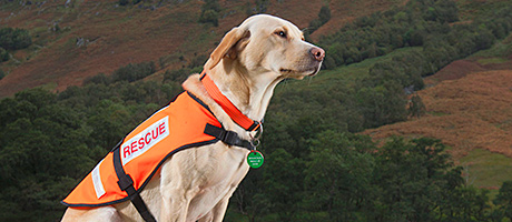Whisky to back rescue teams