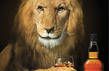 Lion purrs in surprisingly smooth Scotch push
