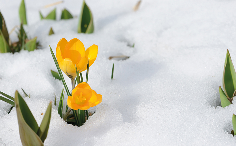 The calendar might have suggested it was spring time but snow fell in much of Scotland late into April this year.
