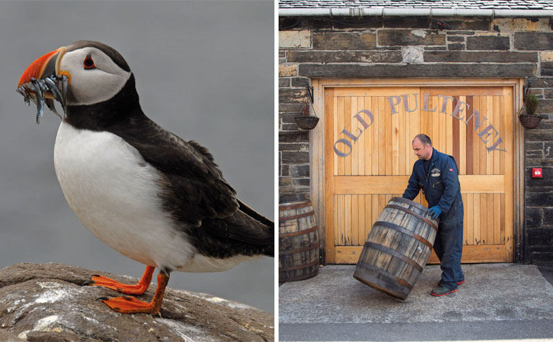 Puffin and doors to distillery