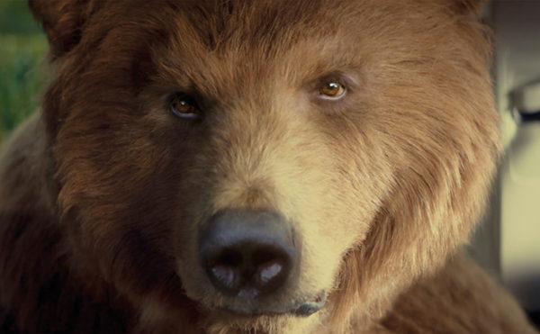 Bear's big break
